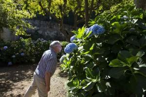 Smelling geranium flowers
