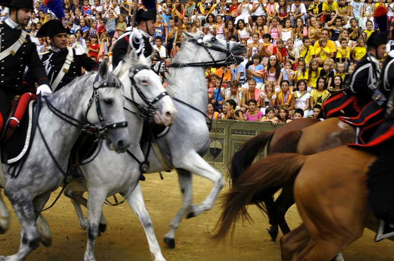 Horse race preparation for the Palio di Siena characteristic horse race in Siena Tuscany